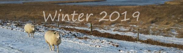 Winterbilder 2019