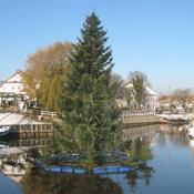 Tannenbaum im Wasser